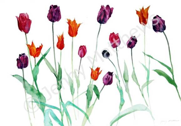 Ann's Tulips greetings card