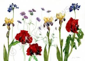 Three Poppies greetings card