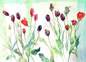 Wet Weather Tulips, 86 x 118 cm, watercolour on paper, framed selling price £3,400. Also available as greetings card.