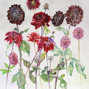 Dark Dahlias. 50 x 50cm, watercolour on paper, framed price £1,350 SOLD (Corrymella Scott Gallery)