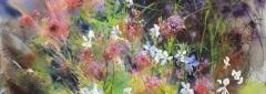 Contrast - Flower Border, Limousin, France I Jenny Matthews