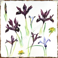 First Flowers of the Year I, 30 x 30, watercolour on paper, framed selling price £650 SOLD