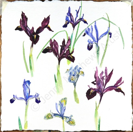 First Flowers of the Year II, 30 x 30, watercolour on paper, framed selling price £650
