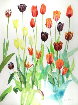 Roscullen Tulips 2016 I, 75 x 55cm, watercolour on paper, framed selling price £1,850