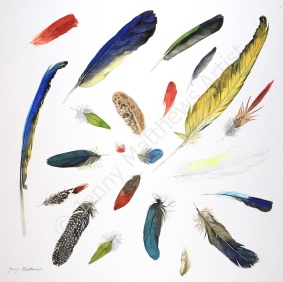 Harlequin Feathers I 50 x 50cm, watercolour on paper, framed selling price £1,500