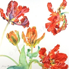 Parrot Tulips 20 x 20cm, watercolour on paper, framed selling price £550 SOLD