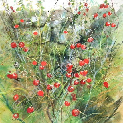 Berries from Torduff 50 x 50cm, watercolour on paper, framed selling price £1,500 Available as Greetings card/Christmas card