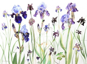 Irises, 55 x 75cm, watercolour on paper, unframed price £1,720 SOLD