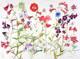 Lone Poppy, 55 x 75cm, watercolour on paper, framed price £1,850
