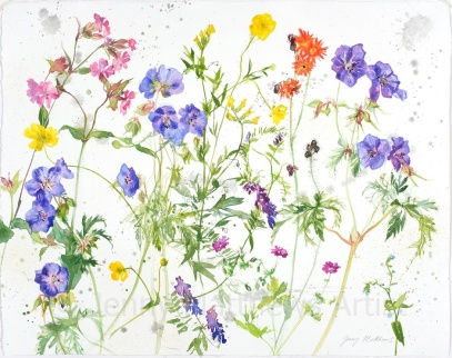 Wild Flowers from Torphin, 40 x 50cm, watercolour on paper, framed price £1,250 SOLD