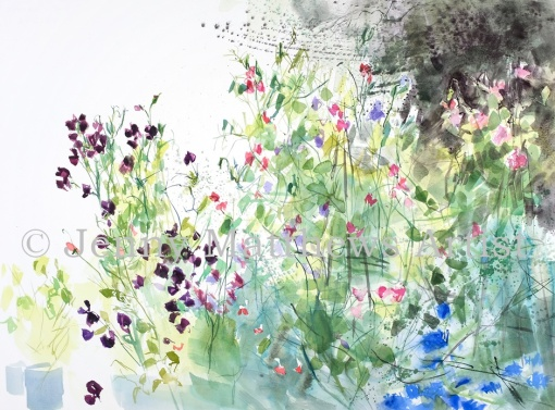 Chaotic Sweet Peas, 56 x 76cm, watercolour on paper, framed price £1,850
