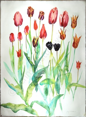 Roscullen Tulips, 75 x 55cm, watercolour on paper, framed price £1,850